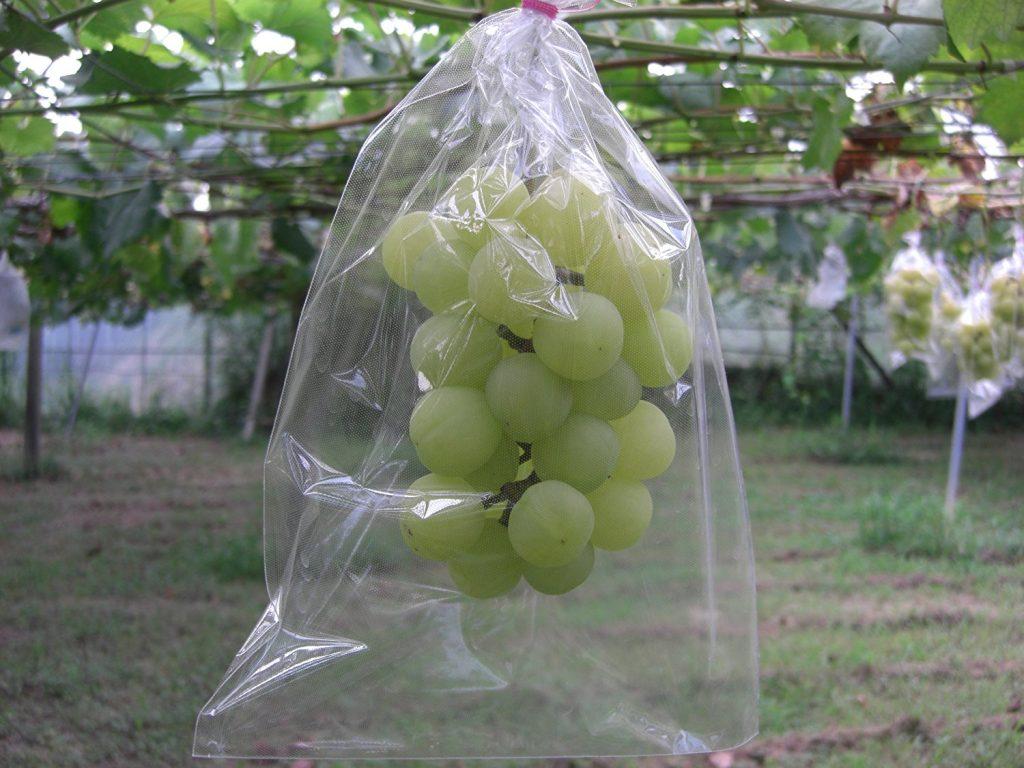 Không nên bảo quản trái cây vận chuyển đường xa bằng túi nylon.